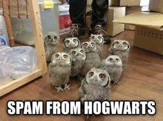 If I ever saw this I would FREAK OUT. With excitement. Because spam mail from Hogwarts would be AWESOME and owls are cool.