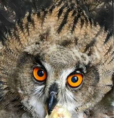 Owl, Animals, Party, Pictures, Horned Owl, Villach, Natural Wonders, Animales, Animaux