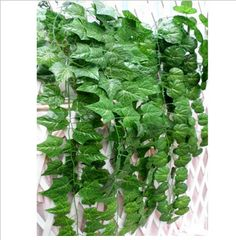 8 Best Jean's plants images in 2019   G vines, Houseplants ... House Plants With Exposed Fur Html on feather plant, girl plant, italian plant, horn plant, honey plant, white plant, garden plant, food plant, glass plant, silver plant, straw plant, milk plant, shell plant, dog plant, hair plant, japanese plant, mushroom plant, ivory plant,