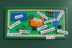 """Featured Project: """"Lego plant cell"""" made by make it snappy… Plant Cell Project Models, Cell Model Project, Animal Cell Project, 3d Plant Cell Model, Plant And Animal Cells, Science Cells, Science Fair Projects, School Projects, Biology Projects"""