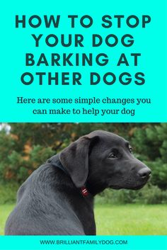 Your dog may bark at other dogs because of fear or over-enthusiasm. Either way you can make changes fast - and kindly! Visit site