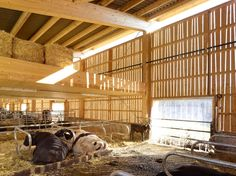 Often relegated to the marginal and out of sight, farm and agricultural buildings are as much of a blank canvas for architecture as any other building progra...