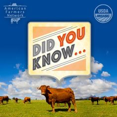 Did you know that cattle have 4 separate chambers in their stomachs? The rumen, the reticulum, the omasum and the abomasum. This is what classifies cows are ruminants!