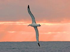 """I would choose to be an albatross. Albastross sail aloft for many thousands of miles without alighting.... Wanderers. But even an albatross has a home on earth.... Each returns to the same spot year after year, to meet the same mate.... I like the fidelity as much as the wandering. Anne Truitt, """"Prospect"""""""