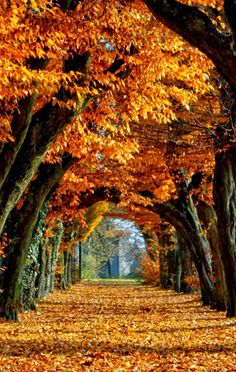Splendor of Fall