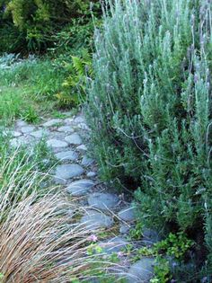 stone path through lavender and rosemary