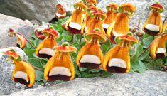 Calceolaria uniflora - Darwin's Slipper Flower