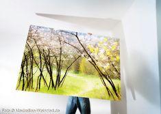 Foto Art, Painting, Pictures, Camera, Idea Paint, Canvas, Art Production, Nature