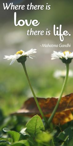 """""""Where there is love there is life."""" -Mahatma Gandhi"""