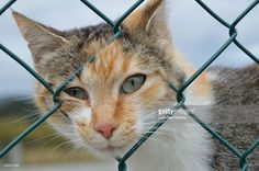 thoughtful cat next to a fence at refugee camp