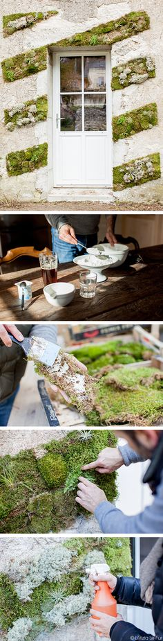 Les fournitures : Mousse des bois sous forme de plaque et de boule : 3 cagettes Tillandsia et lichen gris La préparation de la colle (pour environ 1 m2) : 1,7 kg de farine, 5 bières de 33 cl, 600 ml d'eau, 2 yaourts, 150 g de sucre en poudre Le matériel : Une casserole usagée, une spatule Préparation : Dans la casserole, sur feu doux, mélangez, dans l'ordre, la farine, les bières, l'eau, les yaourts et le sucre. Continuez de remuer la préparation jusqu'à obtenir un mélange homogène. #diy Dry Garden, Moss Garden, Balcony Garden, Water Garden, Garden Art, Garden Design, Jardin Decor, Garden Doors, Permaculture