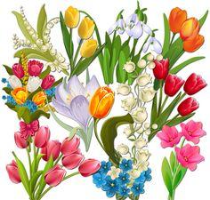 Grafika átlátszó háttérrel - Beautiful első tavaszi virágok