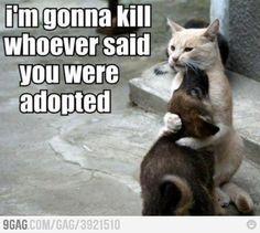 Moms. animal-love