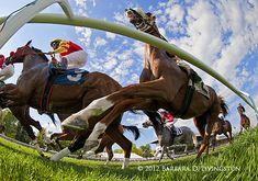 Worm's eye-view, turf racing.