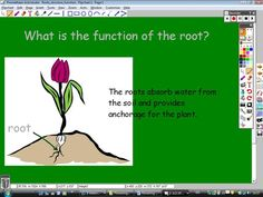 FLowering Plants Lesson 2: Roots Structure and Function