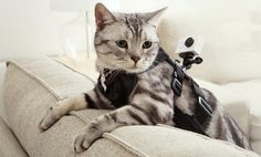 Gagnez une caméra Yi Sport  http://leblogdestendances.fr/high-tech/camera-yi-sport-16573 #camera #xiaomi #tendance