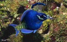 (2012-03) Peacock + fish = peash?