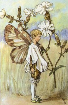 060714 White Campion ~ The White Campion Fairy - Cicely Mary Barker