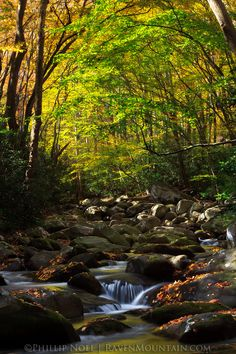 Porters Creek, Greenbrier, Great Smoky Mountains National Park, Tennessee; photo by Phillip Noll