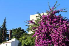 Lisbon green city living. July 2014