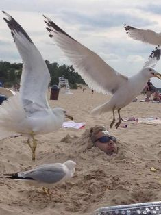 35 Ideas Funny Fails Pictures Perfectly Timed Photos Fun For 2019 Funny Photo Captions, Funny Pictures With Captions, Picture Captions, Funny Animal Pictures, Funny Photos, Funny Animals, Random Pictures, Photo Fails, Picture Fails