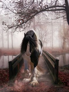 Beautiful horse, beautiful morning....