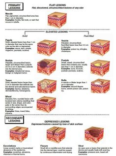Integumentary System Medical Terminologyadaptive Anleitung, Source by xeniumbell Medical Coding, Medical Science, Computer Science, Medical Esthetician, Nursing School Notes, Medical School, Nursing Information, Nursing Assessment, Medical Assistant