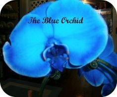 The Rare Blue Mystique Orchid. Photos And Tips On How To Grow And Care For Orchids