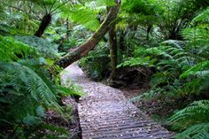 A footpath in the Knysna Forest, Garden Route - South Africa. Knysna, Forest Cottage, Forest Garden, Forest Trail, Kwazulu Natal, Holiday Accommodation, Holiday Apartments, Lush Garden, Beautiful Places