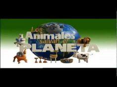Los animales salvan el Planeta (compilado) - YouTube