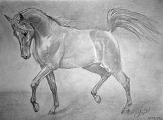 лошади рисунки: 21 тыс изображений найдено в Яндекс.Картинках