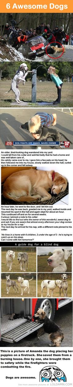 6 Awesome Dogs. My favorite is the one about the old tired-looking dog! So sweet!!
