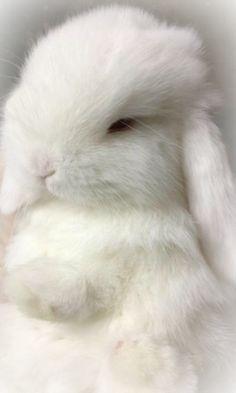 /(>'.'<)White Bunny