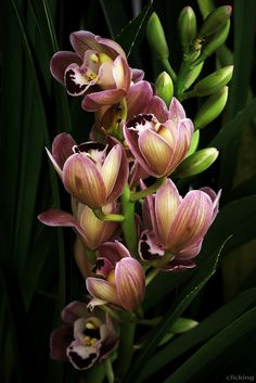 blooms-and-shrooms:   Orchid by Dzung  Viet Le