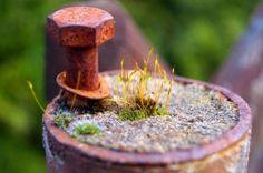 Die Natur findet einen Weg... Makro