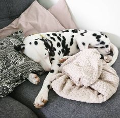 Contrary to popular belief, letting your dog sleep with you in your bed has nothing dirty or unhealthy. Yes, there are a lot of upsides to letting your Cute Funny Animals, Cute Baby Animals, Animals And Pets, Dolly Parton, Cute Puppies, Dogs And Puppies, I Love Dogs, Animals Beautiful, Pet Dogs