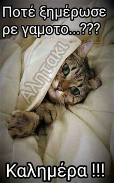 My Alarm Clock, Frases Humor, Animal Quotes, Pet Quotes, Good Morning, Funny Animals, Dog Cat, Funny Memes, Lol