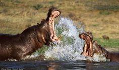 Μάχες επιβίωβσης στην άγρια φύση