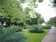 Romanian Academy garden #bucharest #photography