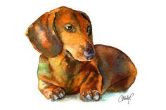 Choose your favorite dachshund paintings from millions of available designs. All dachshund paintings ship within 48 hours and include a money-back guarantee. Dachshund Tattoo, Dachshund Breed, Dachshund Funny, Arte Dachshund, Long Haired Dachshund, Dachshund Love, Dachshund Drawing, Dapple Dachshund, Dachshund Gifts