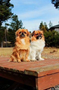 Wilma & Millie