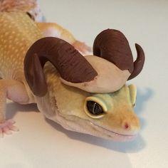 Ram Leopard Gecko Cute, Cute Gecko, Cute Funny Animals, Cute Baby Animals, Animals And Pets, Les Reptiles, Cute Reptiles, Rabbit Cages, Terrarium Reptile