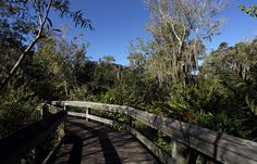 Wooden boardwalks wind through Boyd Hill Nature Preserve in St. Petersburg.