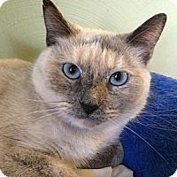 Adopt A Pet :: Persephone - South Bend, IN