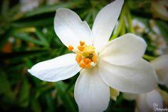 https://flic.kr/p/GcYEeb   White Flower