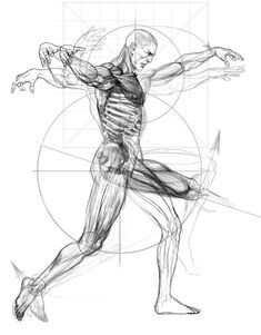 Range of motion, rotation from the point of origin on a sphere determined my the proportional length of the part in question and the flexibility of the Joint. Human Anatomy Drawing, Human Figure Drawing, Body Drawing, Life Drawing, Drawing Faces, Anatomy Sketches, Art Sketches, Art Drawings, Anatomy Reference