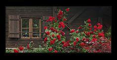 A rose window