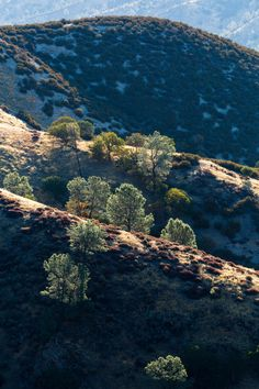 Flora of Pinnacles National Park 作者 QT Luong