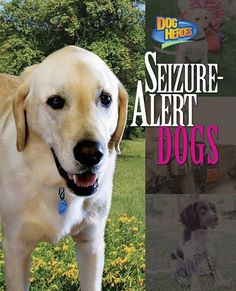 Seizure-Alert Dogs (Dog Heroes)