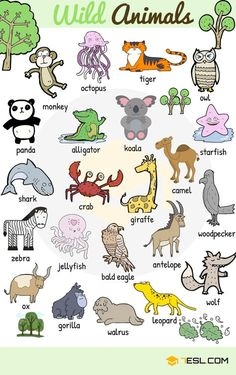 Learn animals vocabulary/ animal names through pictures. Everybody loves animals, keeping them as pets, seeing them at the zoo or visiting … wild Animal Names: Types of Animals with List & Pictures English Vocabulary Words, Learn English Words, English Lessons, English Grammar, English Tips, French Lessons, Spanish Lessons, Kids English, English Study